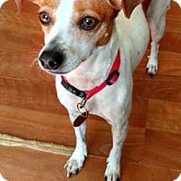 Adopt A Pet :: Cindy - Evans, GA