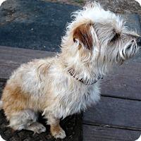 Adopt A Pet :: Carrie - Savannah, GA