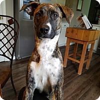 Adopt A Pet :: Rayna - Columbus, OH