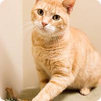 Adopt A Pet :: McDuff - Chicago, IL
