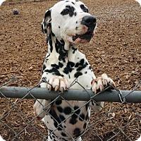Adopt A Pet :: Chip - Temple, GA