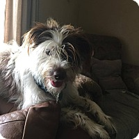 Adopt A Pet :: Mopit - Boerne, TX