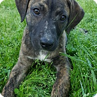 Adopt A Pet :: Bobo - Kittery, ME