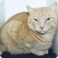 Adopt A Pet :: Ginger - Grass Valley, CA