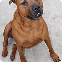 Adopt A Pet :: Cayden - Bunnell, FL