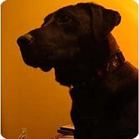 Adopt A Pet :: Megan - Toronto/Etobicoke/GTA, ON