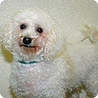 Adopt A Pet :: Farah - Port Washington, NY