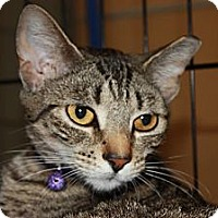 Adopt A Pet :: Lee (MP) - Little Falls, NJ