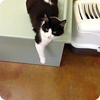 Adopt A Pet :: Fleur - Lake Charles, LA