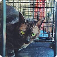 Adopt A Pet :: Zelda - San Ramon, CA