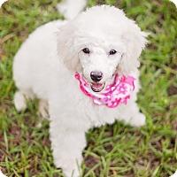 Adopt A Pet :: Yuki - Kingwood, TX