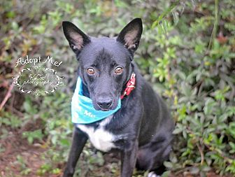 German Shepherd Dog Mix Dog for adoption in Fort Valley, Georgia - Paris