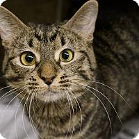 Adopt A Pet :: Kiwi - Monroe, GA