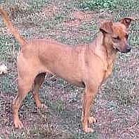Adopt A Pet :: Maple - McDonough, GA
