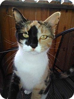 Adopt A Pet :: Chloe  - Snow Hill, NC