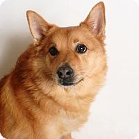 Adopt A Pet :: Freddy - Redding, CA