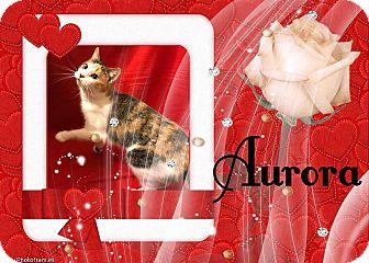 Calico Cat for adoption in Davison, Michigan - Aurora