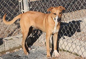 Shepherd (Unknown Type)/Terrier (Unknown Type, Medium) Mix Dog for adoption in Cranston, Rhode Island - Tootles (New Pics)