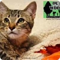 Adopt A Pet :: Mr. Green - Little Rock, AR