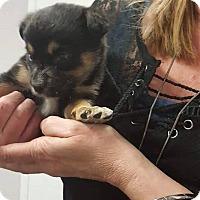 Adopt A Pet :: TAYHLA - Winnipeg, MB