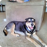 Adopt A Pet :: Luke - Clarksville, TN