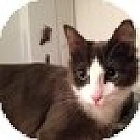 Adopt A Pet :: Daryl - Vancouver, BC