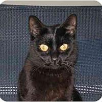 Adopt A Pet :: Skyler (Sweet Girl!) - Portland, OR