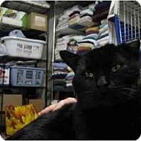 Adopt A Pet :: Sarge - Wakinsville, GA