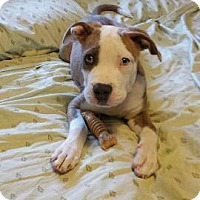 Adopt A Pet :: Bruce ~ Adoption Pending - Youngstown, OH