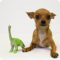 Adopt A Pet :: Little Foot - Mission Viejo, CA