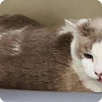 Adopt A Pet :: Snowflake - Tucson, AZ