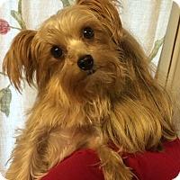 Adopt A Pet :: Elsa - Kansas city, MO