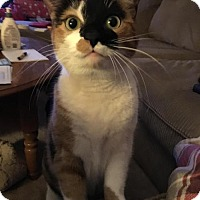 Adopt A Pet :: Molly - Parker Ford, PA