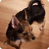 Adopt A Pet :: Pee Jay - Cary, NC
