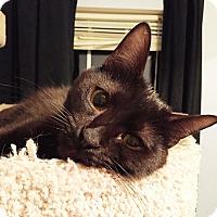 Adopt A Pet :: A..  Warren - Mooresville, NC