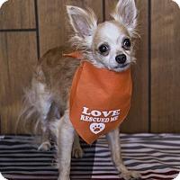 Adopt A Pet :: Sunny - Tavares, FL