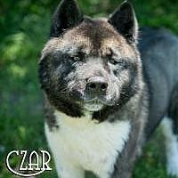 Adopt A Pet :: Czar - Toms River, NJ