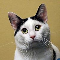 Adopt A Pet :: Daddy O - Overland Park, KS