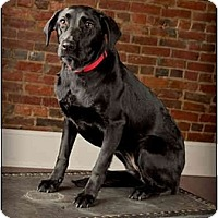 Adopt A Pet :: Shadow - Owensboro, KY