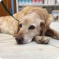 Adopt A Pet :: Canela - Courtesy Posting - New Canaan, CT