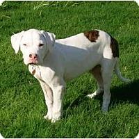 Adopt A Pet :: Mosby - Gilbert, AZ