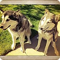 Adopt A Pet :: Luna & Vida - Santa Monica, CA