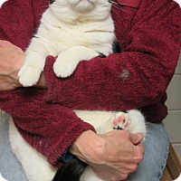 Adopt A Pet :: Betsy - Roseville, MN