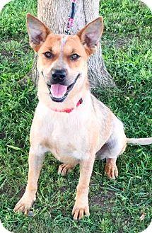 Australian Cattle Dog Mix Dog for adoption in Texico, Illinois - Lexie