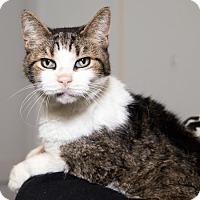 Adopt A Pet :: Grandpaw - Martinsville, IN