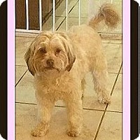 Adopt A Pet :: Sophie - Rancho Cucamonga, CA