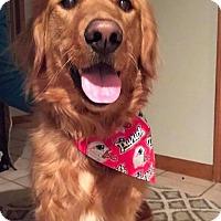 Adopt A Pet :: Gabriella - New Canaan, CT