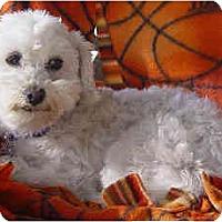 Adopt A Pet :: Fletcher - La Costa, CA