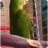 Adopt A Pet :: WEBSTER - Mantua, OH