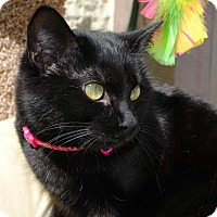 Adopt A Pet :: Sparkle - Palmdale, CA